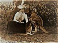 Pet Kangaroos, Central QLd, 1895, (SLQ Image)